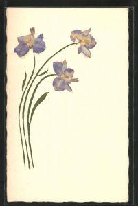 Trockenblumen-AK Getrocknete blaue Blumen mit gemalten Stängeln