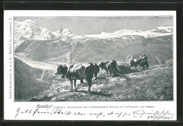AK Nestle's Condens-Alpenmilch, Rinder in den Bergen