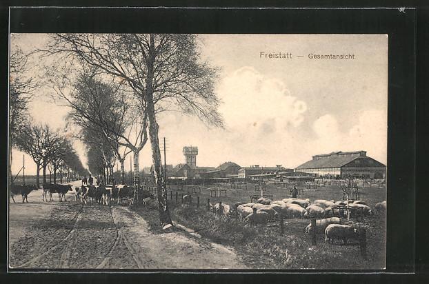 AK Freistatt, Blick von einer Strasse auf landwirtschaftliche Betriebe, Kühe und Schweine 0