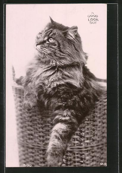 AK A good look out, Katze mit langem Fell in Körbchen