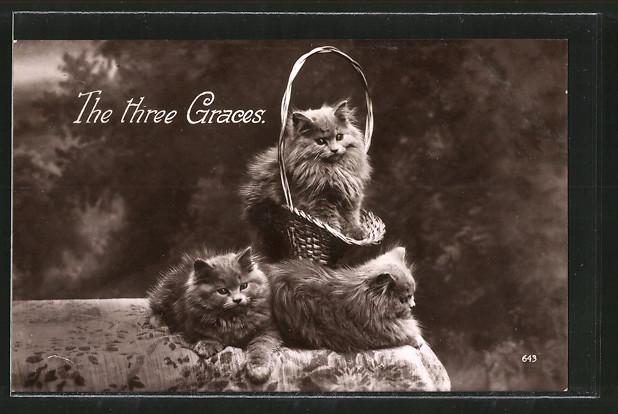 AK The three Graces, drei Katzen mit einem Körbchen