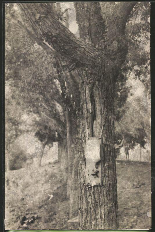Fotografie 1.WK, Kaffeemühle von deutschen Soldaten an einem Baum befestigt
