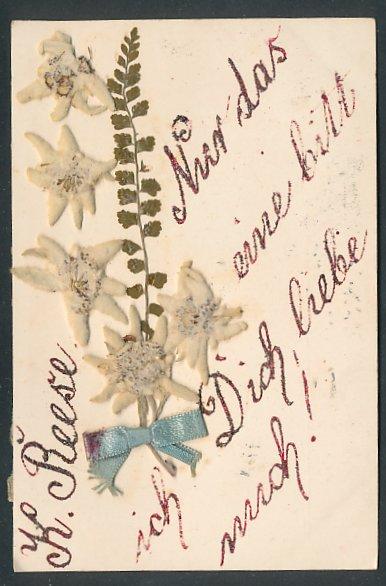 Trockenblumen-AK Edelweiss mit Schleife