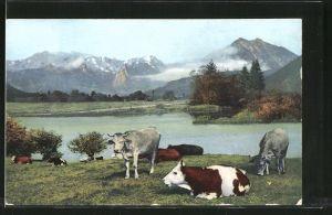 AK Kühe auf einer Weide mit Blick auf Berge