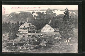 AK Schlingelbaude, Panorama mit weidenden Rindern