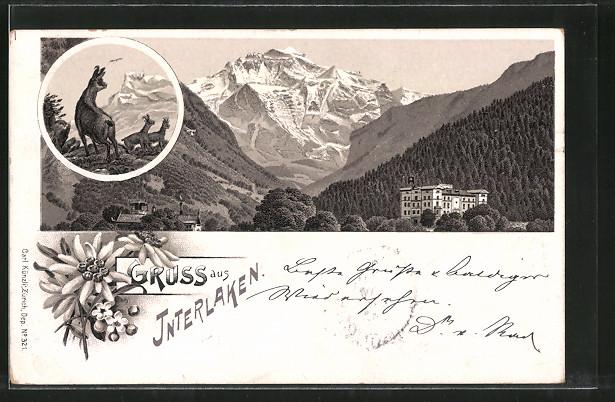 Lithographie Interlaken, Hotel vor Bergpanorama, Gemsen im Gebirge