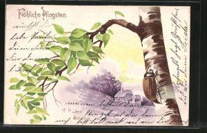Künstler-Lithographie Maikäfer klettert an einer Birke empor, Pfingsten