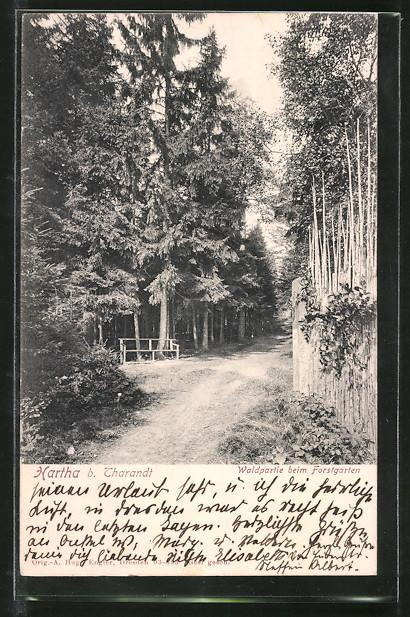 AK Hartha, Waldpartie beim Forstgarten 0