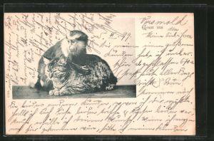 AK Affe und getigerte Katze