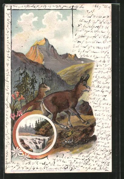 Lithographie Gemsen im Gebirge