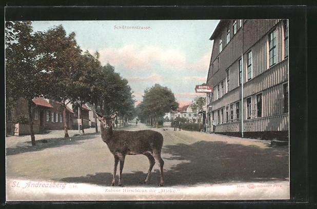 AK St. Andreasberg, Zahme Hirschkuh