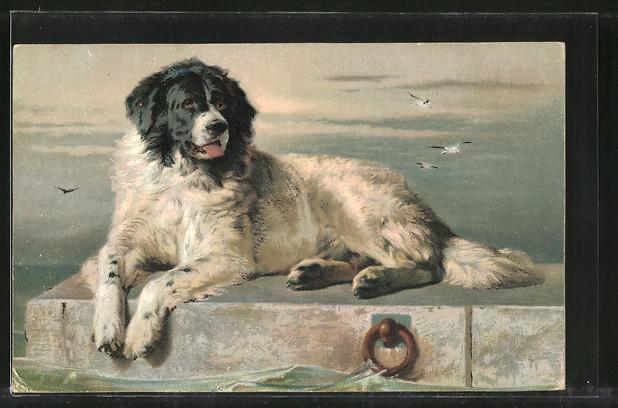 Künstler-AK Portrait eines Hundes