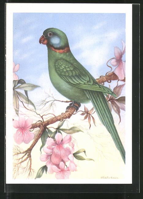 AK Alexander-Papagei auf einem Ast