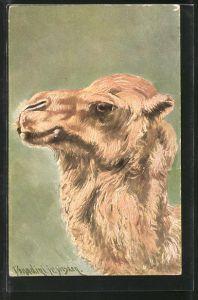 Künstler-AK Ermenegildo Carlo Donadini: Kopf eines Kamels