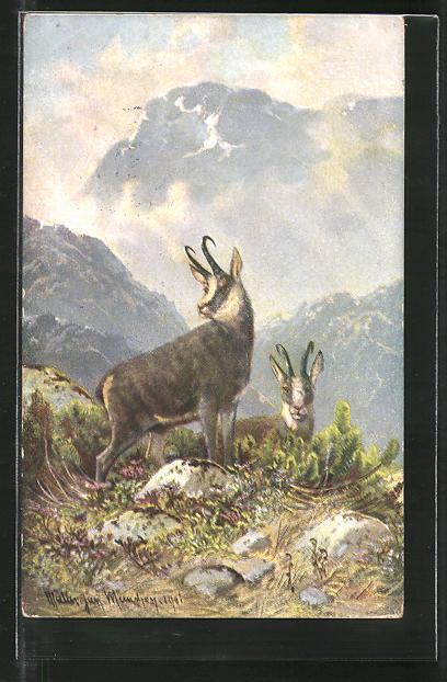 Künstler-Lithographie M. Müller jun.: Gemsen im Gebirge