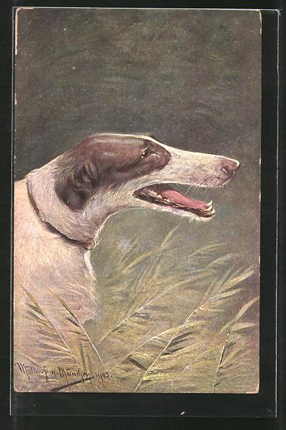Künstler-AK M. Müller jun.: Kopf eines Windhundel