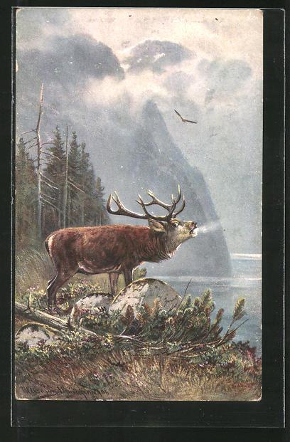 Künstler-AK M. Müller jun.: Röhrender Hirsch an einem Bergsee