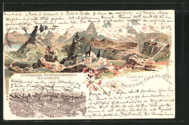 Lithographie Berner Oberland, Gemsen im Gebirge, Reklame für Hoffmanns Stärkefabriken in Salzuflen