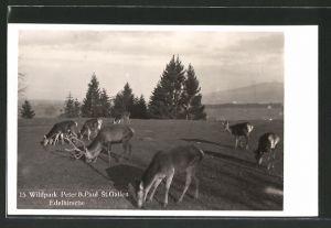AK St. Gallen, Edelhirsche im Wildpark Peter & Paul