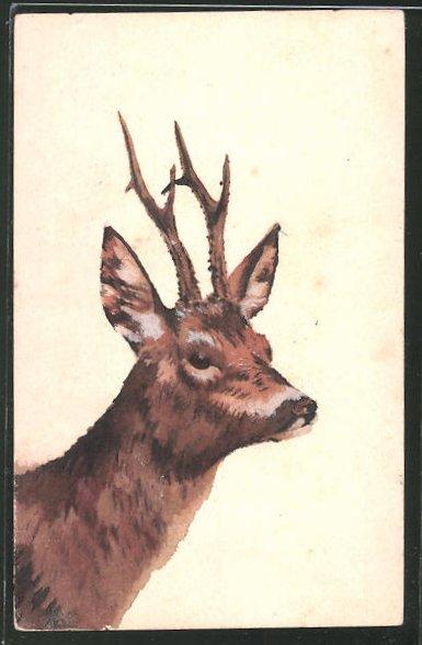 Künstler-AK Handgemalt: Kopf eines Rehbocks