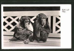 AK Halle, Affen Babu und Suse im Zoologischen Garten