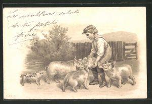 AK Junge füttert die Schweine