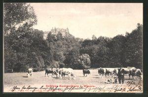 AK Mansfeld, Blick auf das Schloss Rammelburg