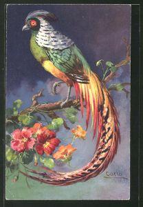 AK Paradiesvogel auf dem Blütenast