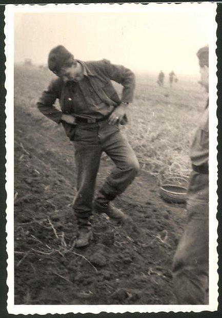 Fotografie DDR-KVP, Kasernierte Volkspolizei, Soldaten lesen Kartoffeln von einem Acker auf