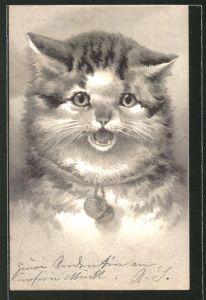 Präge-AK Getigerte Katze mit Halsband