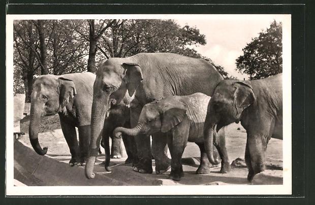 AK Hagenbeck's Tierpark Hamburg, Elefanten-Freianlage