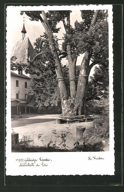 AK Millstatt am See, 1000jährige Linde