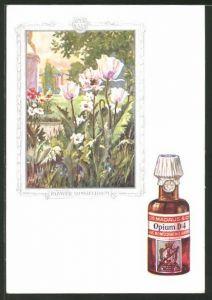 AK Dr. Madaus & Co, Homöopathische Heilmittel, Papaver Somniferum