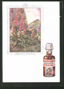 AK Dr. Madaus & Co, Homöopathische Heilmittel, Digitalis Purpurea, Roter Fingerhut