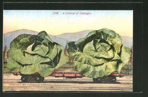 AK A Carload of Cabbages, Riesige Kohlköpfe auf einem Güterzug