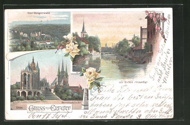 AK Erfurt, Dom und Severuskirche, Steigerwald, Klein Venedig