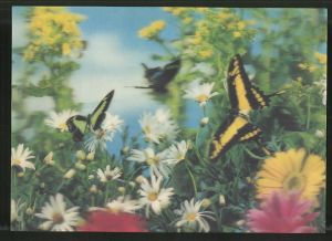 3D-AK Schmetterlinge auf einer Blumenwiese