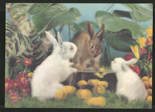 3D-AK Three Rabbits, 3 Hasen auf einer Wiese an einem Baumstumpf