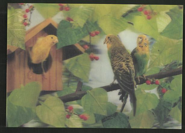 3D-AK Wellensittiche auf einem Ast, gelber Vogel in einem Vogelhäuschen