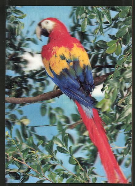3D-AK Papagei sitzt auf einem Ast