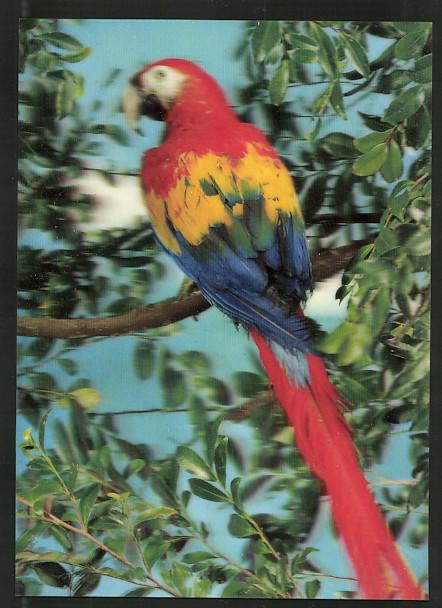 3D-AK Parrot, Papagei auf einem Ast
