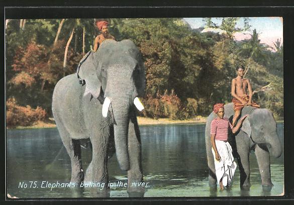 AK Indien, Elefanten baden im Fluss