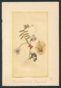 Trockenblumen-AK Trockenblumen auf Pergament geklebt