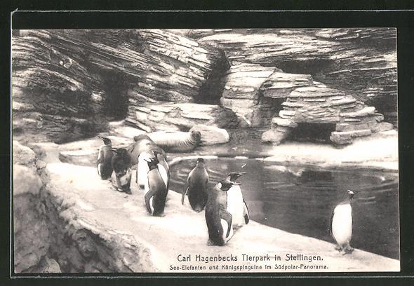 AK Hamburg-Stellingen, Carl Hagenbecks Tierpark, Pinguine