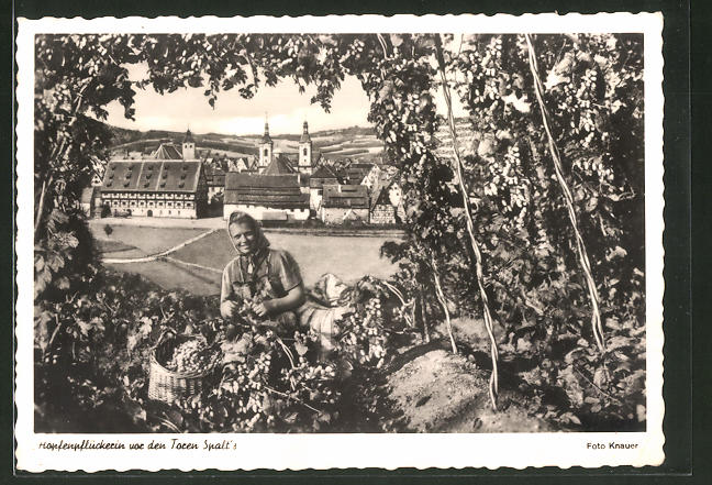 AK Spalt, Hopfenpflückerin vor den Toren der Stadt