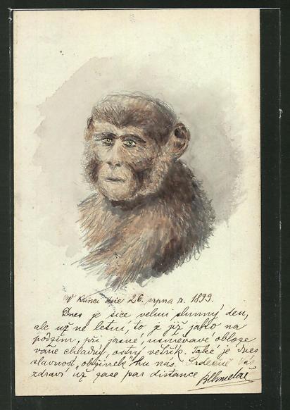 Künstler-AK Handgemalt: Affe blickt zum Betrachter