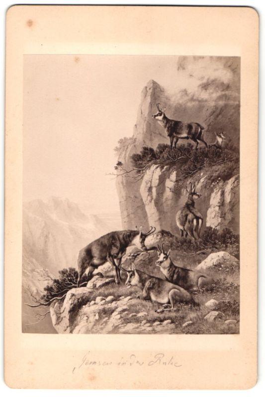 Fotografie unbekannter Fotograf und Ort, Gemälde von unbek. Künstler, Gemsen