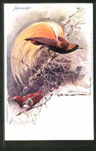 Künstler-AK Paradiesvogel-Männchen und Weibchen bei der Balz