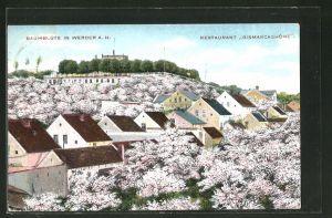 AK Werder a. H., Restaurant Bismarckshöhe während der Baumblüte