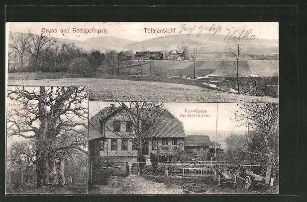AK Seelzerthurm, Forsthaus Seelzerthurm, Dicke Eiche im Forstbezirk